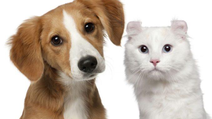 Pets Indonesia